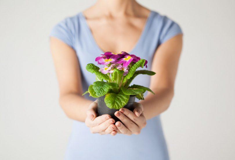 Цветок в горшке в подарок