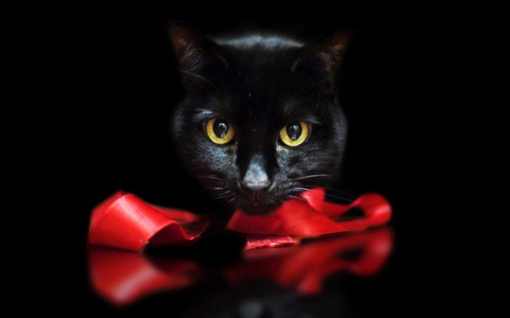Если подарить черного кота