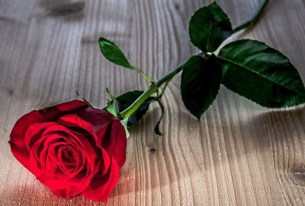 Цветы на 4 года свадьбы