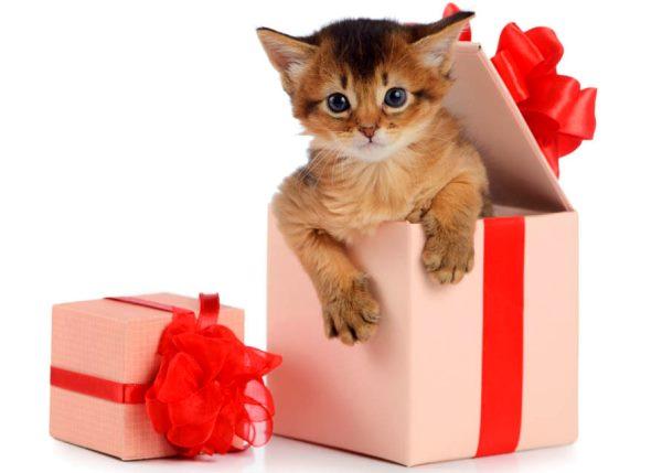 питомца в подарок