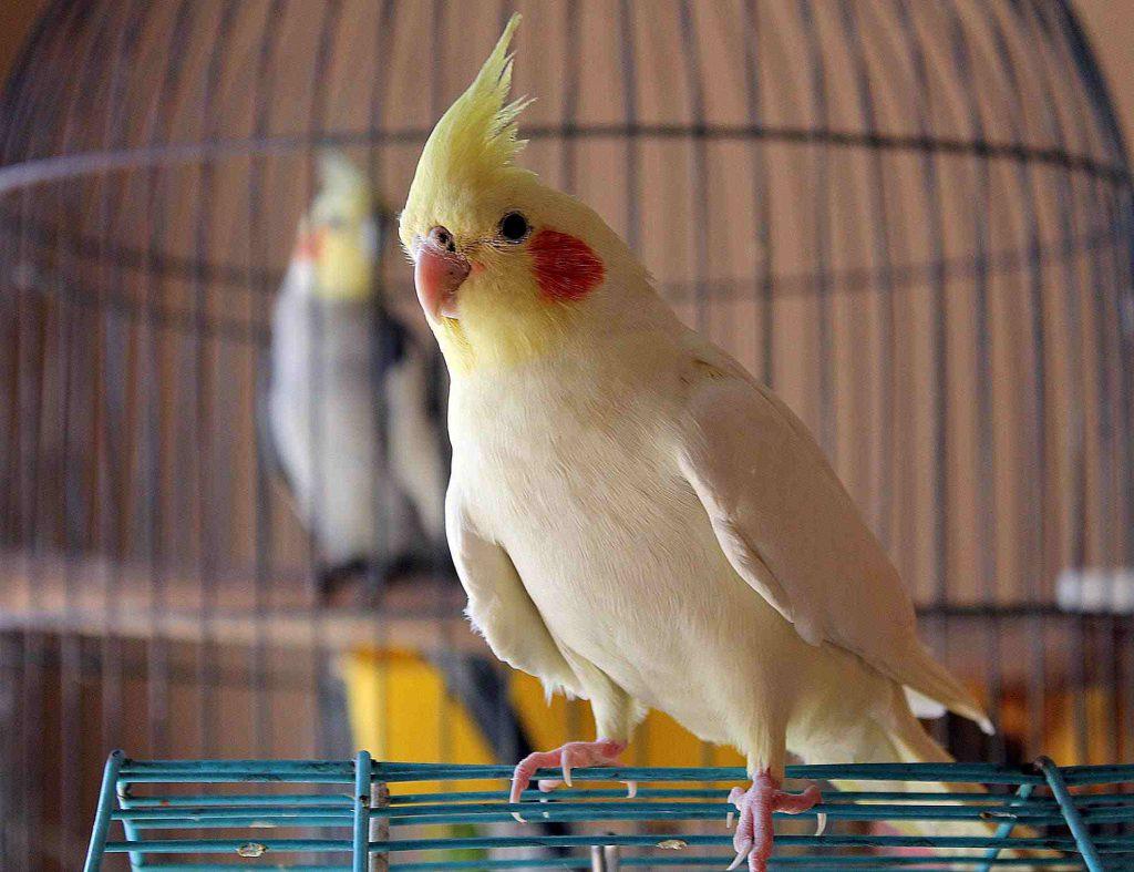 попугай питомец