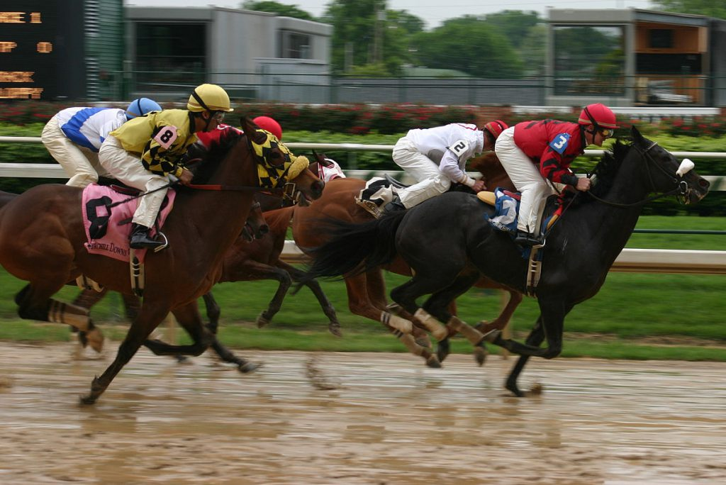 скачки конные