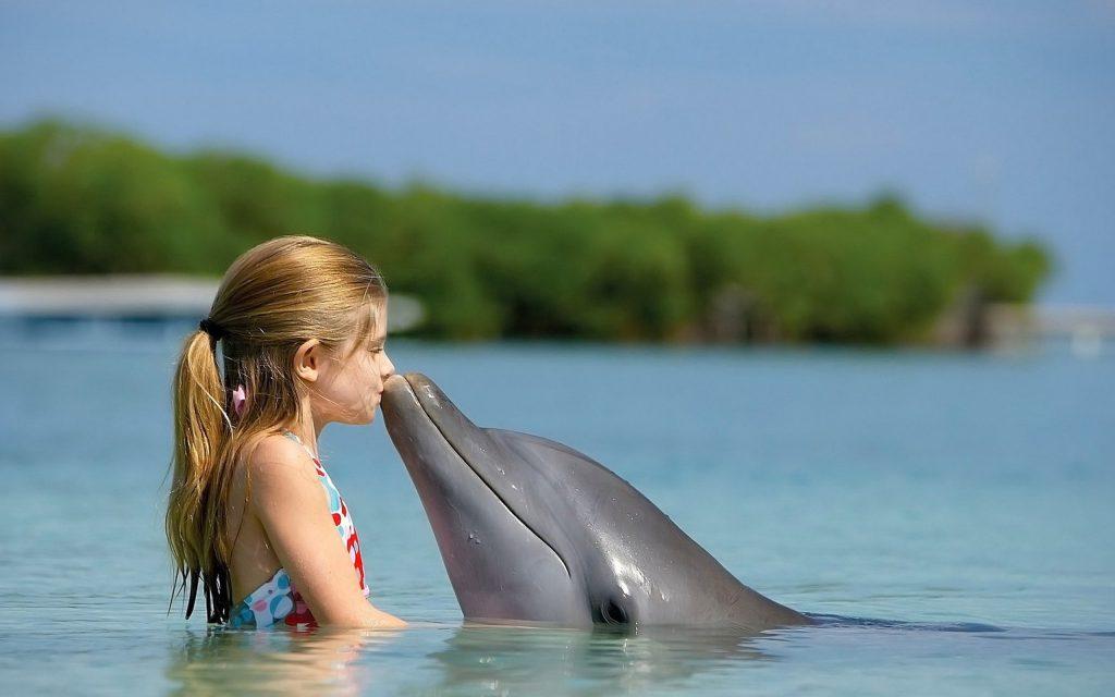 Плавание с дельфином