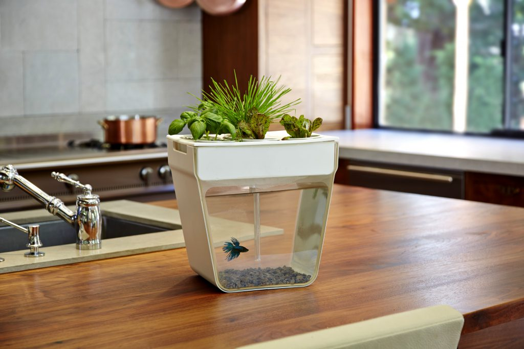 горшок аквариум