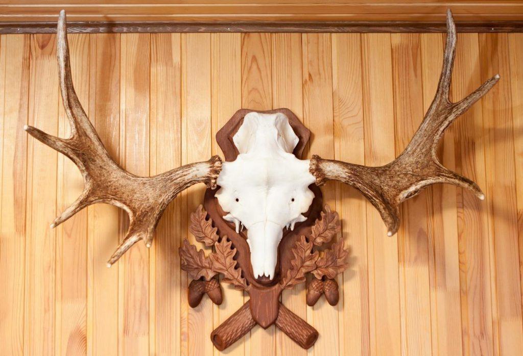 Рога оленя или лося