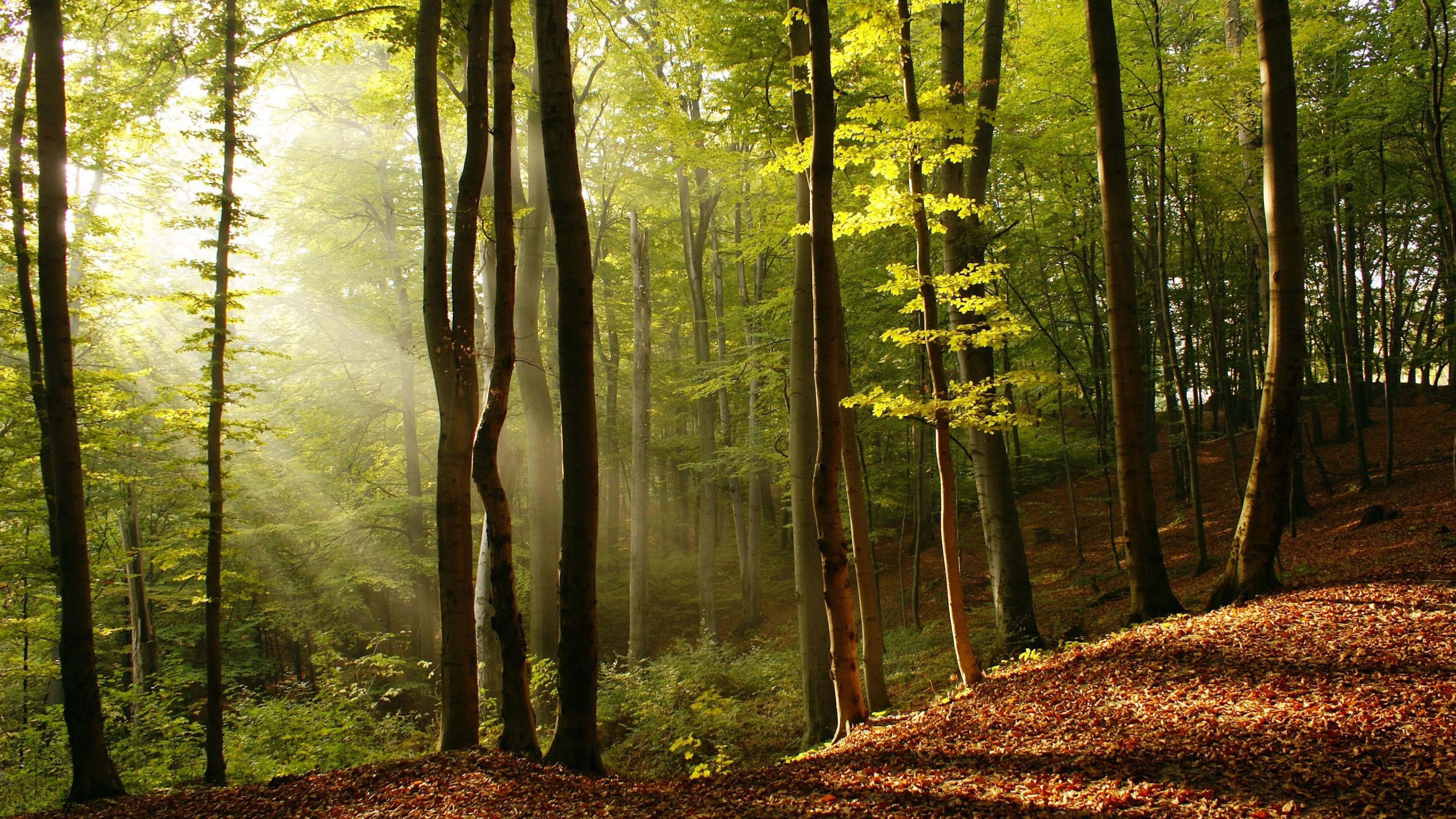 для многих качественные фотографии российского леса комплекту расширителей