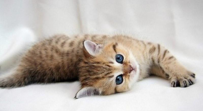 Котенок родителям