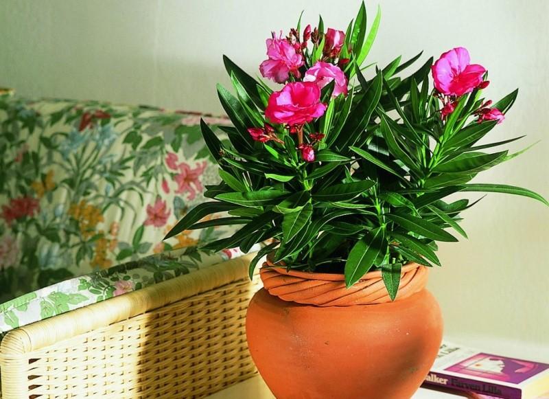 Цветок украсит помещение