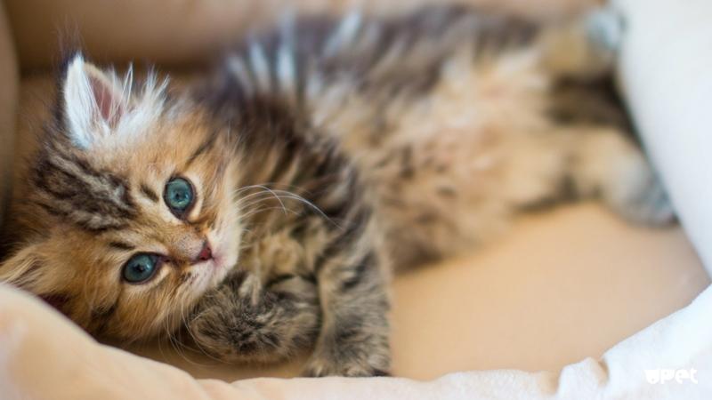 Котенок в подарок