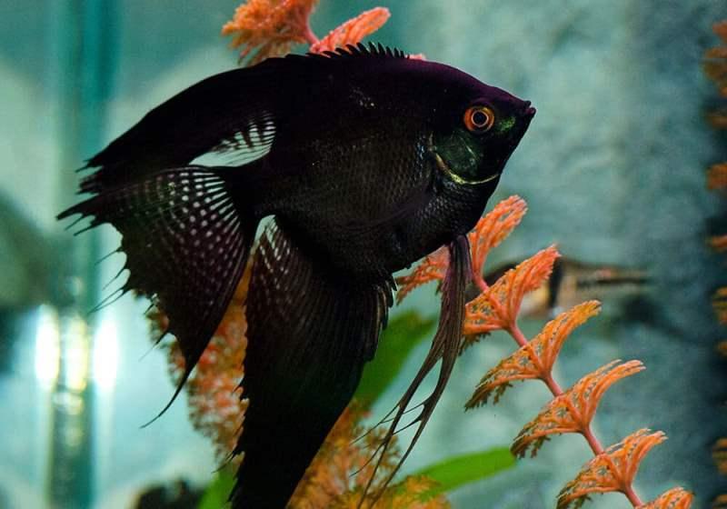 Рыбки в подарок