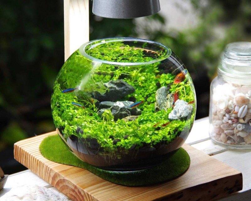 Лучше если аквариум будет небольшого размера